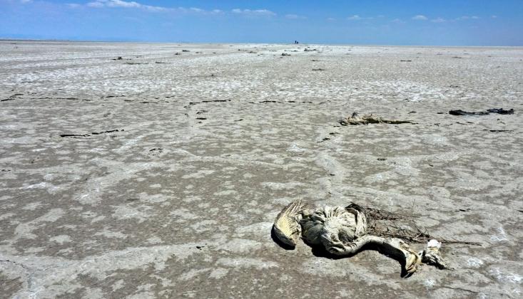 Pakdemirli'den Tuz Gölü'nde Ölen Flamingolar Hakkında Açıklama