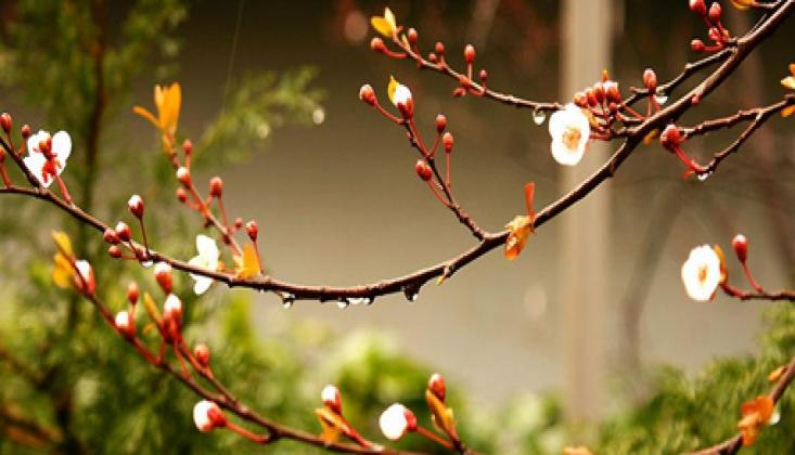 Dua Baharı