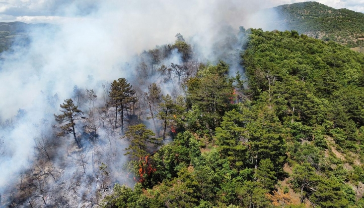Yanan Ormanlar Ranta Açıldı; 'ÇED Gerekli Değil' Raporu
