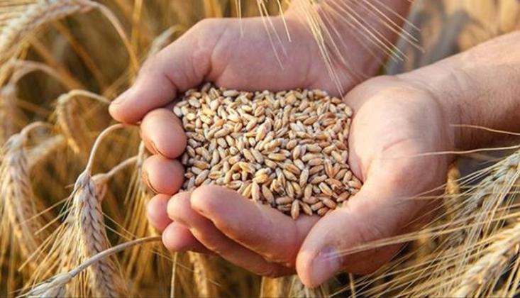 Hasat Devam Ederken Buğday ve Arpa İthalatı