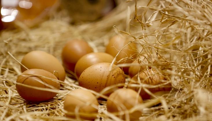 Yumurtanın Fiyatı Bir Yılda 2 Katına Çıktı