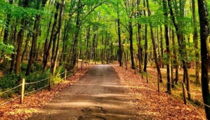 İstanbul'da Ormanlık Alanlara Girişler Yasaklandı