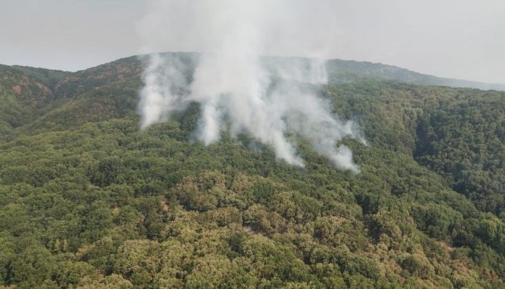 OGM'den Dersim ve Bingöl'deki Yangınlara İlişkin Açıklama