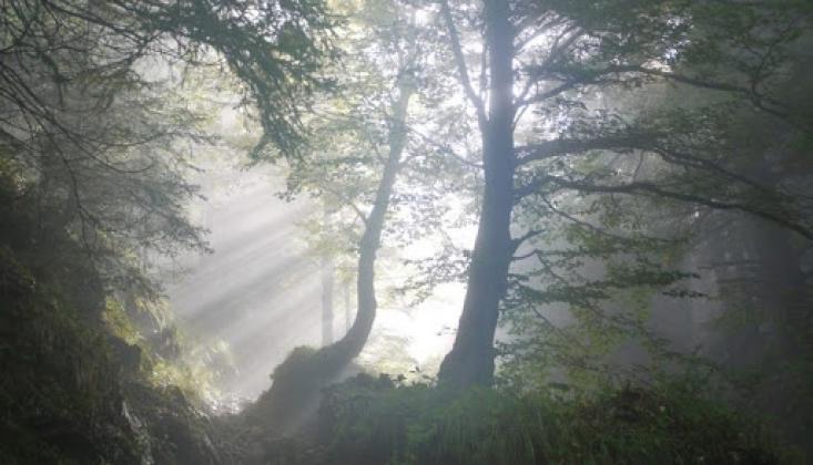 Ruhlar Alemindeki Hayatın Özellikleri