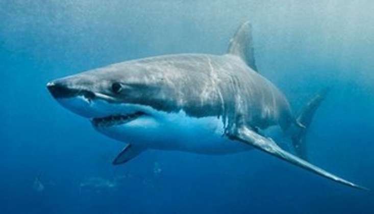 Okyanuslar İçin Korkutan Tespit