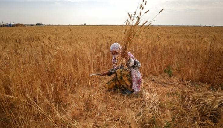 İsrail Askerleri Gazzeli Kadın Çiftçileri de Hedef Alıyor
