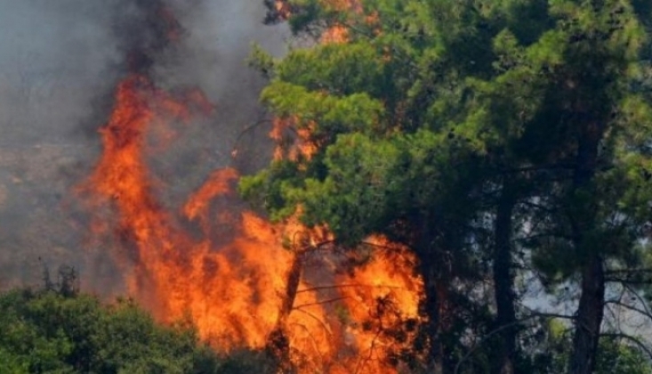 Orman Yangınları İçin Ayrılan Bütçe Nerede?