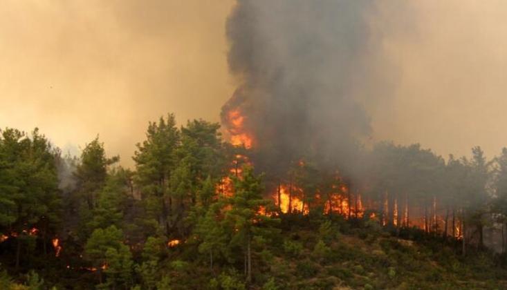 Yangın Bölgesinde Arazi Satış İlanları