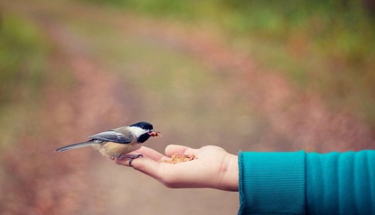 Amel ile Terbiye Edin, Dille Değil