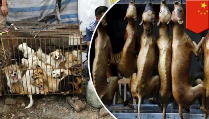 Çin'in Şenzen Kentinde Köpek ve Kedi Eti Tüketimi Yasaklandı